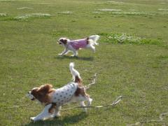 走るリンちゃんとリヴ