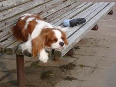 ベンチでうたた寝