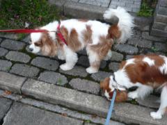 ルイちゃんとお散歩
