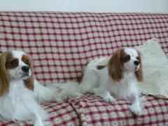 リン&リッキー
