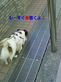 風の散歩6