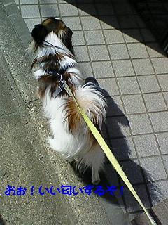 風の散歩2