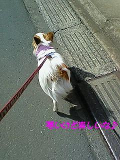 風の散歩3