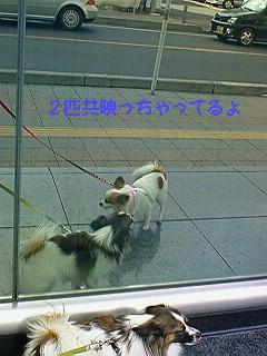 風の散歩5