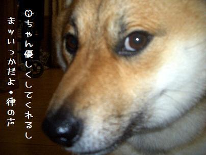 CIMG6931_edited.jpg