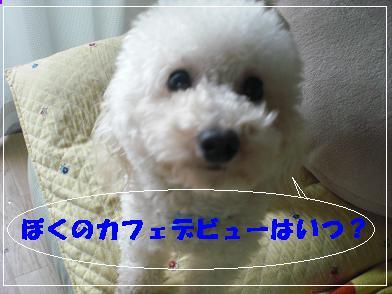 バジル 024-あ