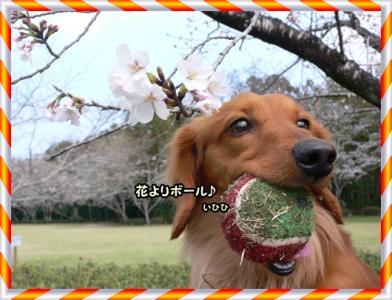 花より…ボール♪
