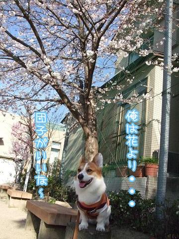 桜もきれいよ~