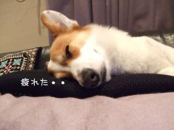 疲れた・・