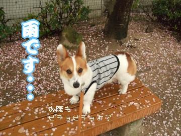 雨です・・・