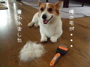 俺の毛が・・・