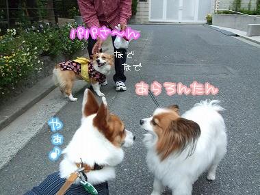 のんちゃん登場☆