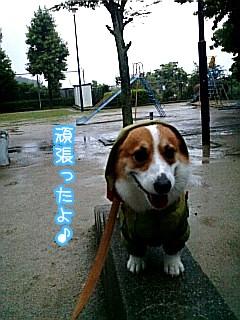 雨の日ろんたん☆