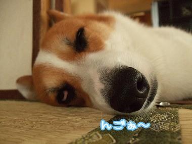可愛くない寝顔・・・