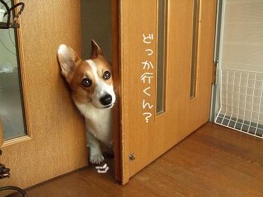 どっか行くん?