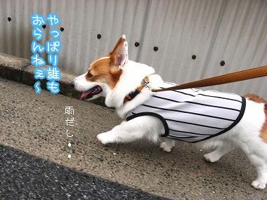 やっぱり雨の日はねぇ~
