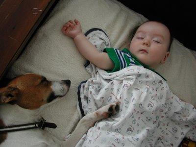 Boomer sleeping with Ro