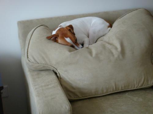 Boomer sleeping5