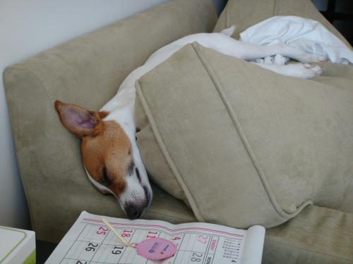 Boomer sleeping6