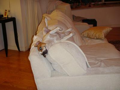 Boomer sleeping13