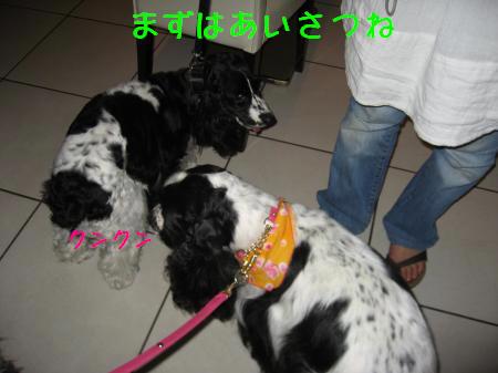 006_convert_20080807005707.jpg