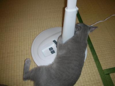 小太郎VS扇風機