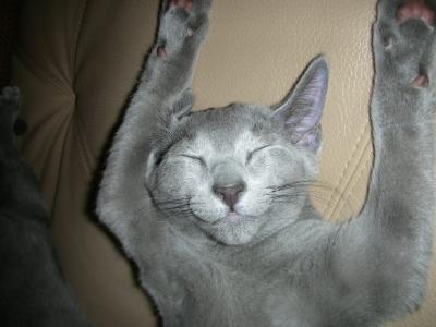 小太郎の寝姿3