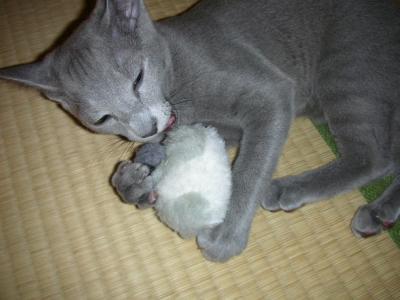 ネズミとの戦い