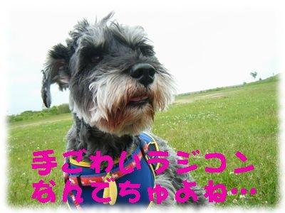 2008_06150054.jpg