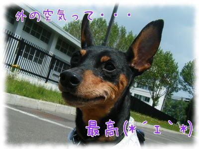 LIN8HvMa.jpg