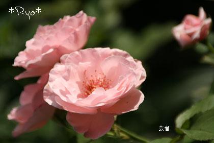 IMG_4182のコピー