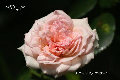 IMG_4234のコピー