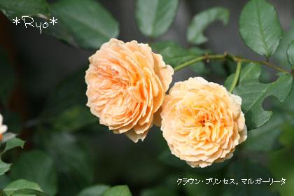 IMG_4195のコピー