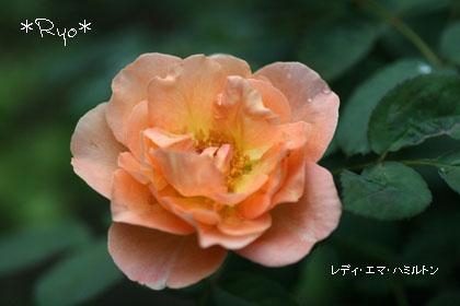 IMG_5077のコピー