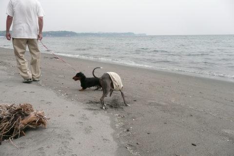 お昼寝海岸