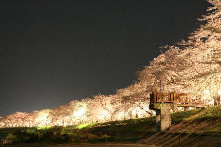 08角館夜桜1