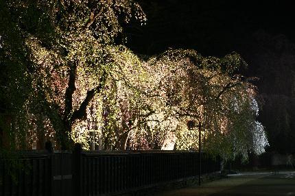 08角館夜桜2