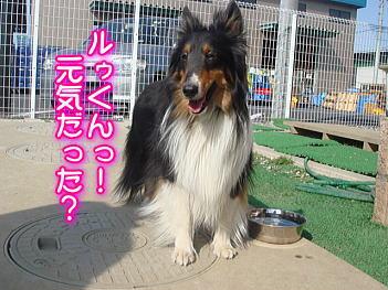 4.10シェリーちゃん!