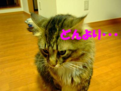 2008_0607-1.jpg