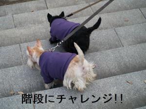 階段にチャレンジ!!!