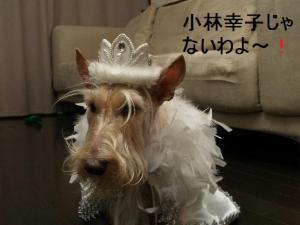 ♪小林幸子♪