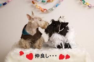 モモちゃん&ロロちゃん仲良し~♪