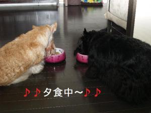 ♪夕食中~♪