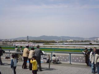 阪神競馬場 芝 ダート