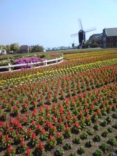 花畑2  ハウステンボス