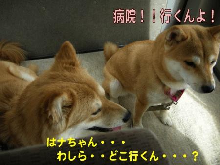 犬マーク1