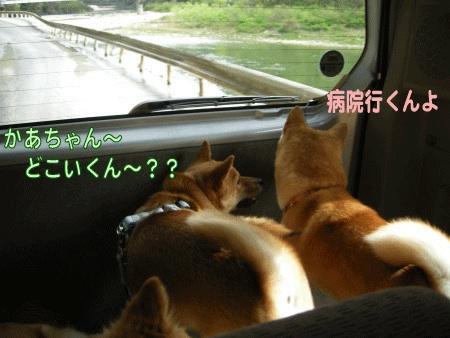 犬マーク2