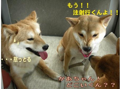 犬マーク3