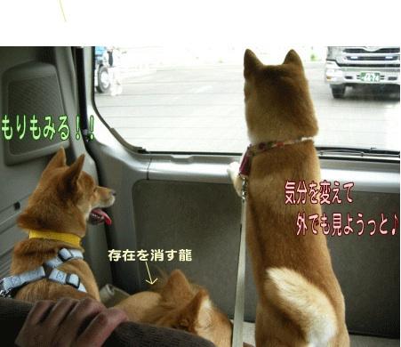 犬マーク4