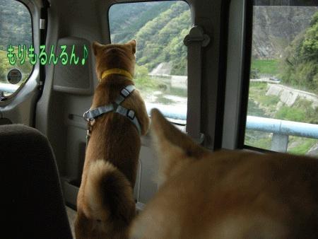 犬マーク5